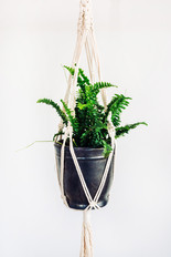 6in. Plant with Handmade Macrame Hanger