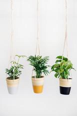 4in Plant with Handmade Macrame Hanger