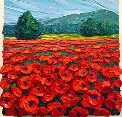 Poppies in Provence 1