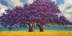 Jacaranda Splendor