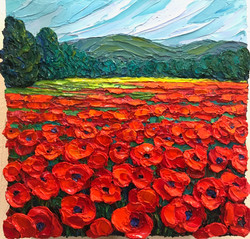 Poppies in Provence 2