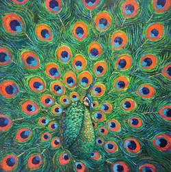 Prescious l Java Peafowl