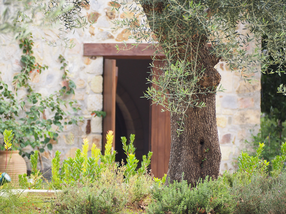Chania Wine Tours: Manousakis Winery- Old Winery