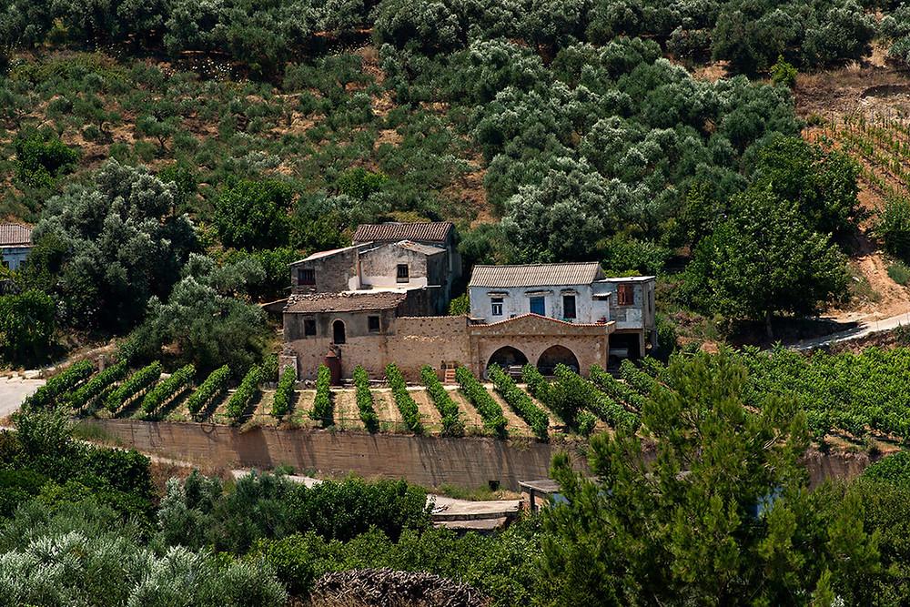 Vineyards at Anoskeli Winery