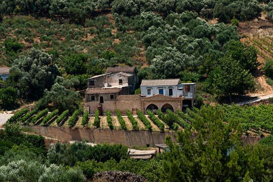 Winery Spotlight: Anoskeli