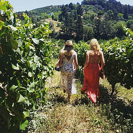 Sunshine, vineyards, friends, and wine.