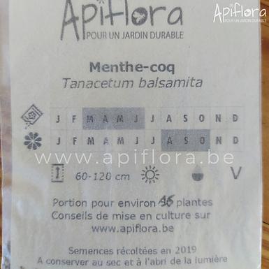 Tanacetum balsamita - Menthe-coq