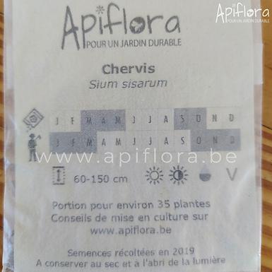 Sium sisarum - Chervis
