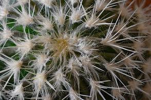 Prickly_Week 4_Texture_Sylven Watson.jpg