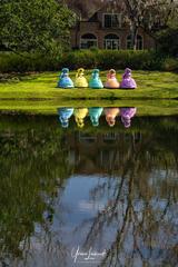 Azalea Trail Maids Reflection_week6_Refl