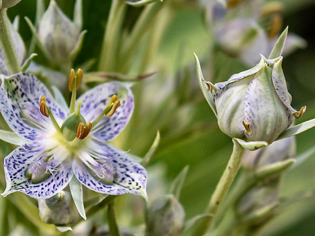 Echo Basin, Mancos - Wildflowers