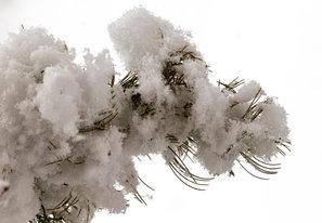 Winter glory Week-4 texture Jerry Bauman