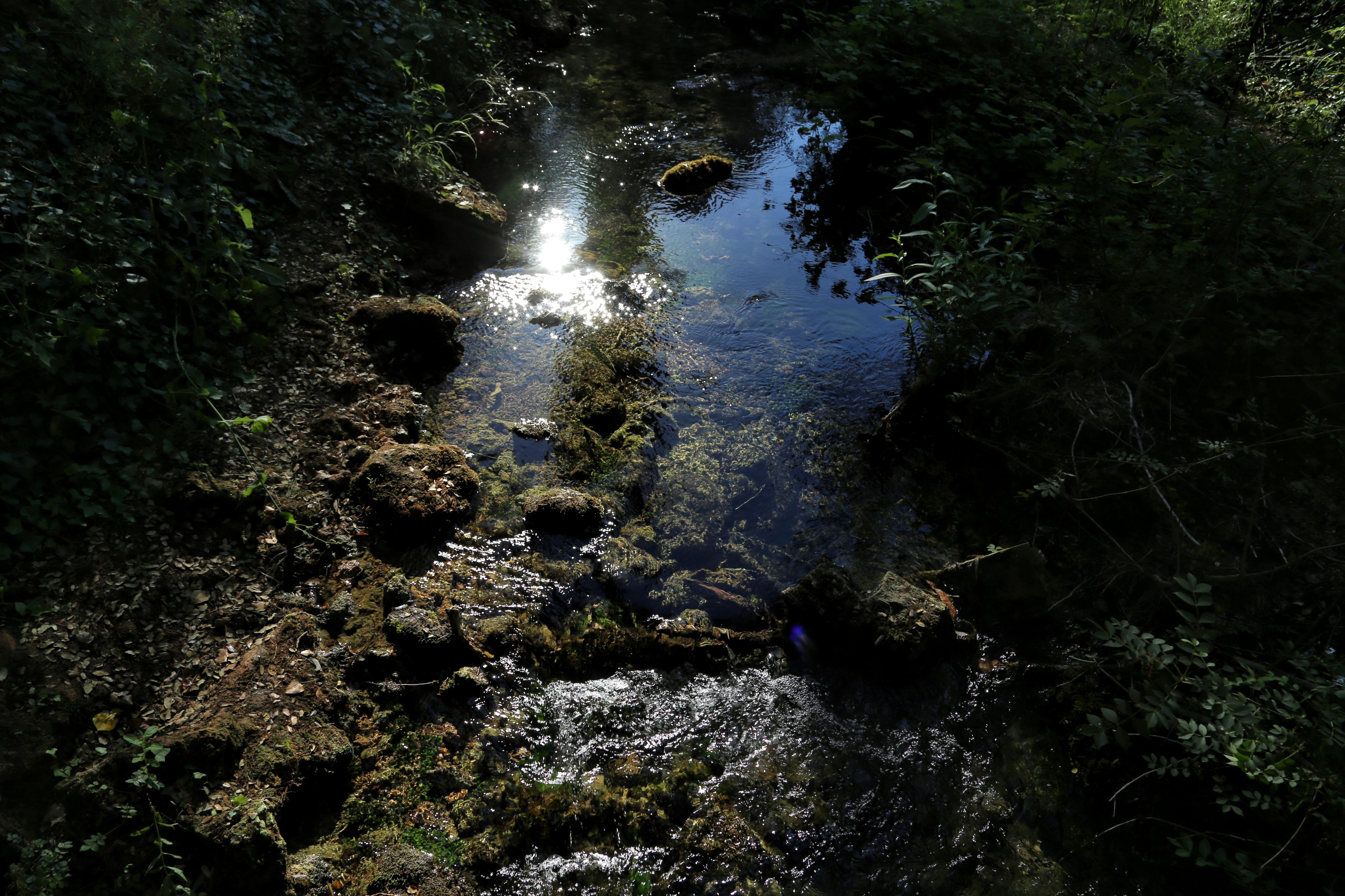 Midsummer Stream