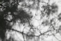 Sierra Shadows
