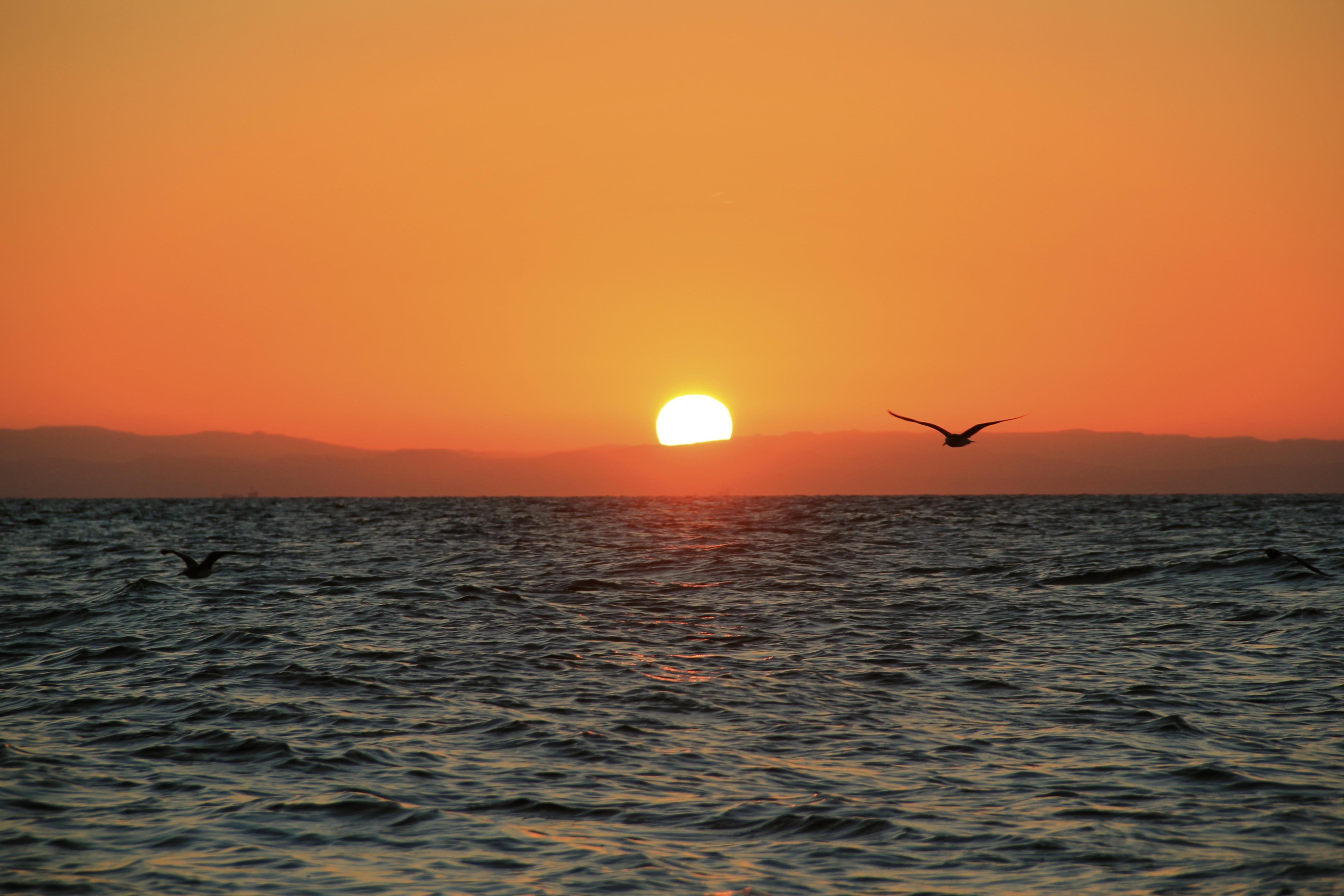 A Flock Sunrise