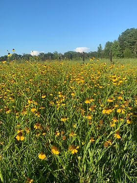 pasture wildflowers.jpg