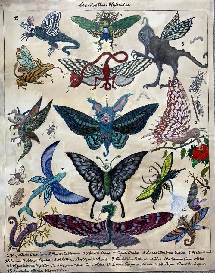 Lepidoptera Hybridae