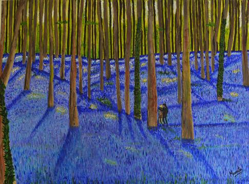 Bluebell Undergrowth