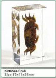 Crab Specimen in Acrylic Block