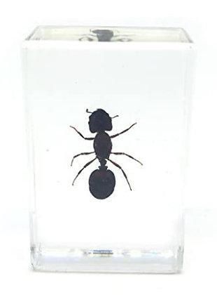 Ant Specimen in Acrylic Block