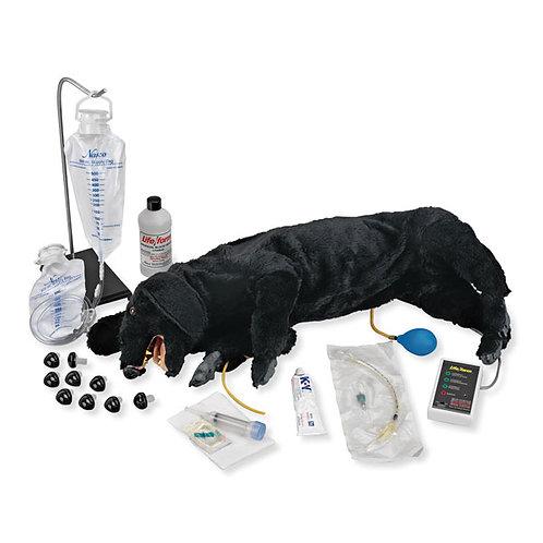 LIFE/FORM® Advanced Sanitary CPR Dog