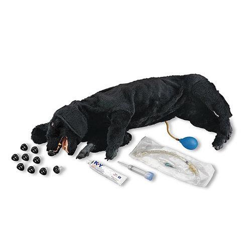LIFE/FORM® Basic Sanitary CPR Dog