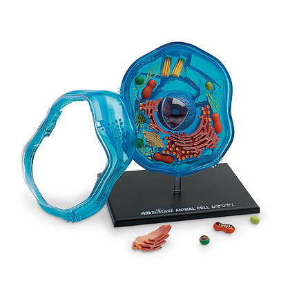 4D Science™ Animal Cell Model
