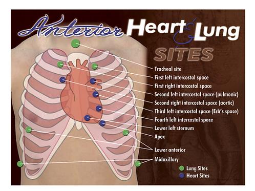 NASCO Anterior Heart & Lung Sites Poster
