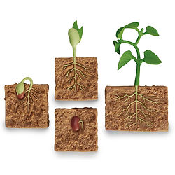 EL11207J- Green Bean Plant.jpg