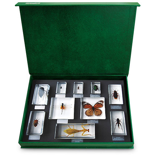 Insect Specimen Blocks - Insect Orders