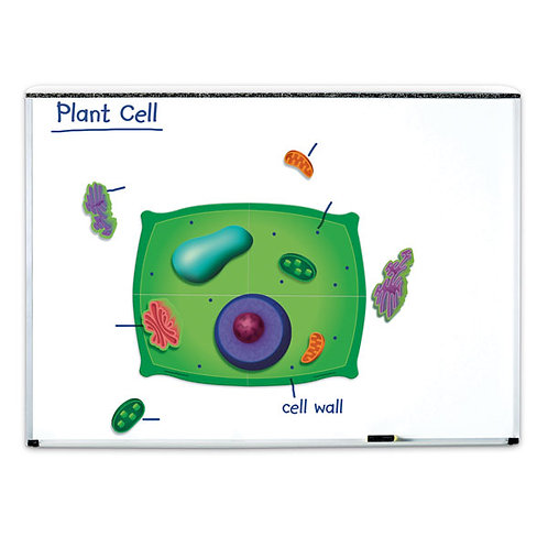 Magnetic Plant Cell Model