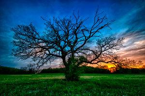 Dynamic Tree