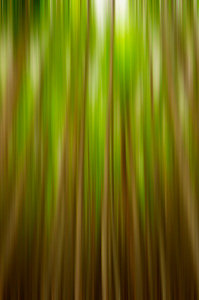 Vertigo Forest