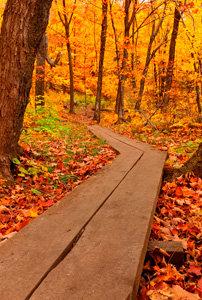 Fall Hike