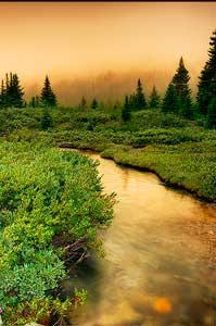 Morning Creek