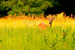 Love the Grass
