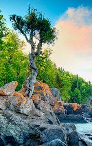Little Spirit Tree