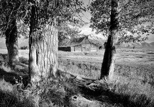 3 Trees & A Barn