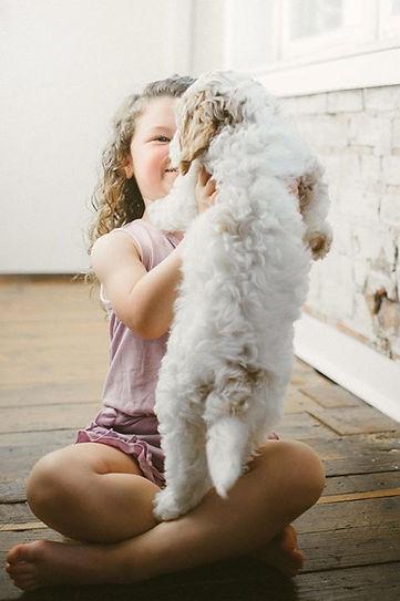 Mini Australian Labradoodle Puppies Available
