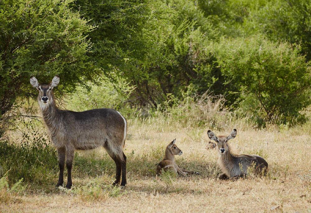 Singita-Sweni-Lodge-Wildlife6.jpg