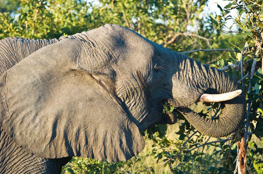 Singita-Ebony-Lodge-Wildlife2.jpg