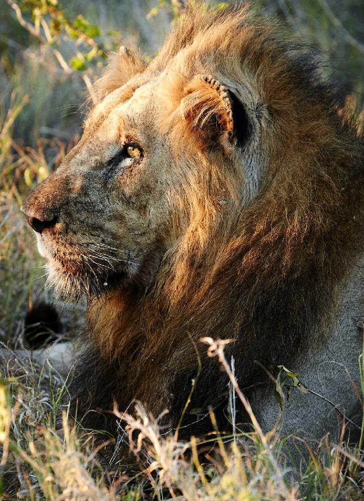 Singita-Sweni-Lodge-Wildlife3.jpg