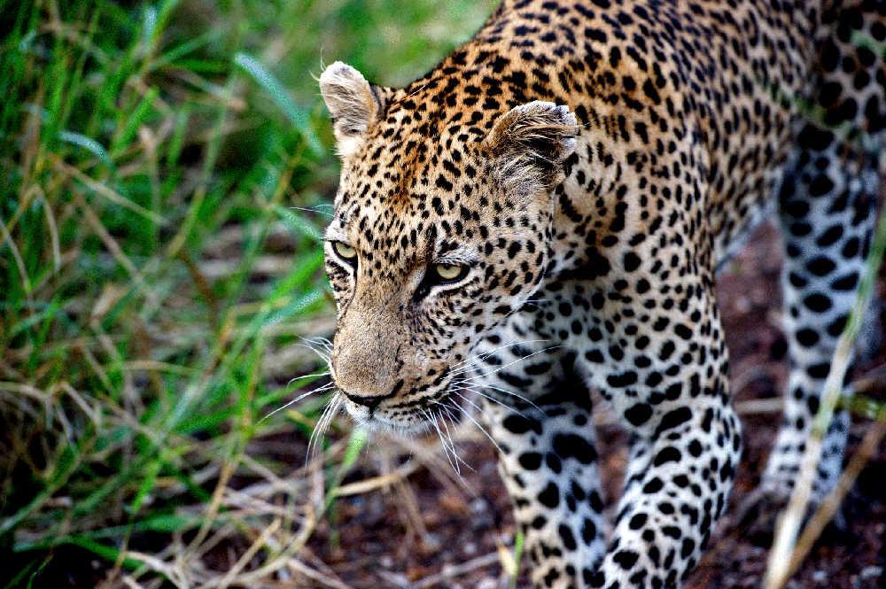 Singita-Lebombo-Wildlife.jpg