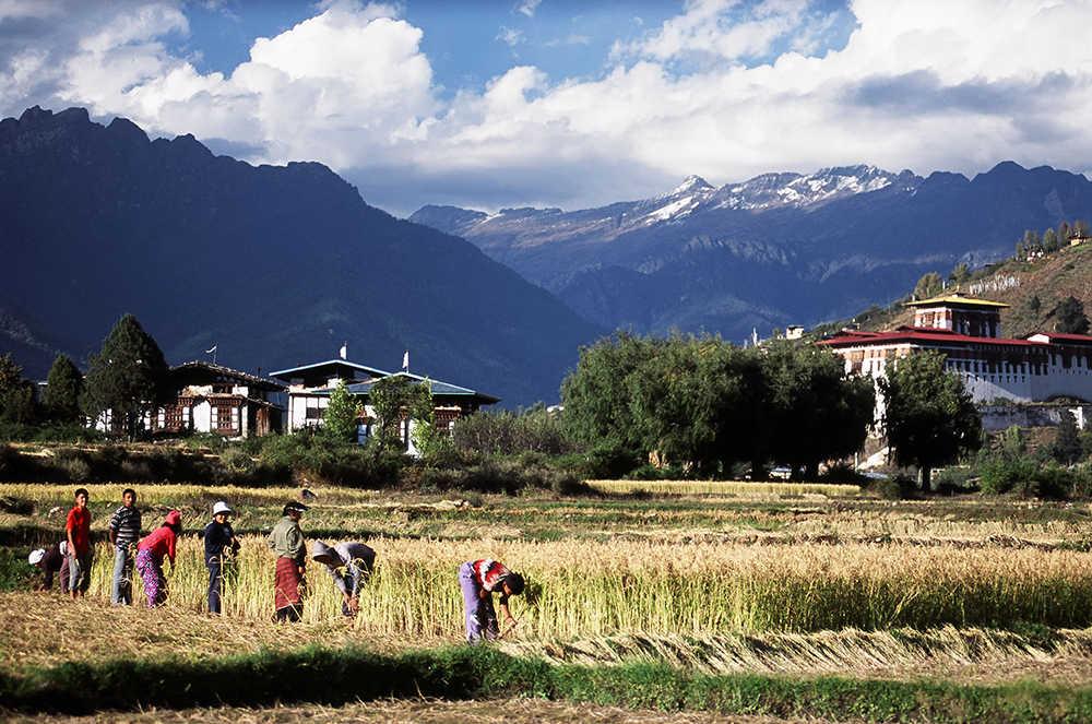 Hi_070691_44080279_Rinpung_harvest.jpg