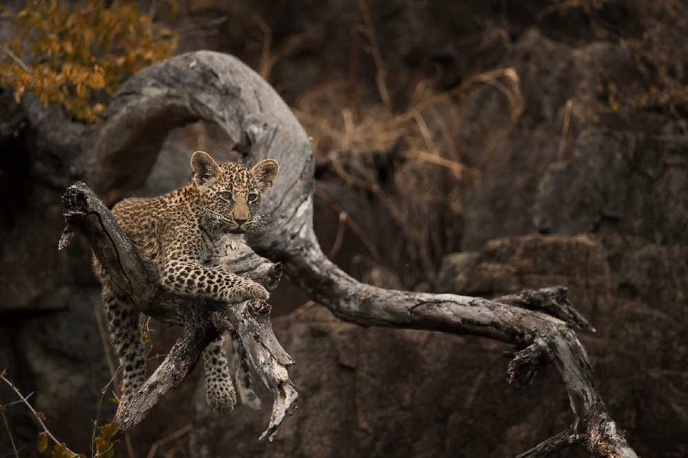 Singita-Castleton-Wildlife7.jpg