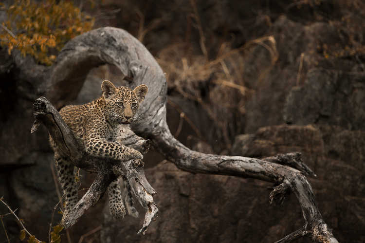Singita-Castleton-Wildlife7.jpg