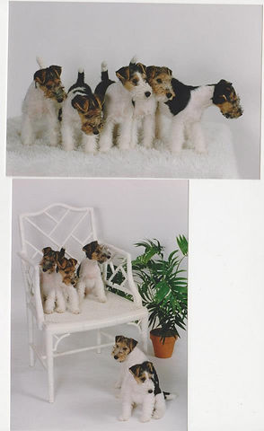mary_puppies.jpg