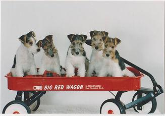 wire_puppies.jpg