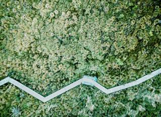 El reto: vincular la sostenibilidad a la economía