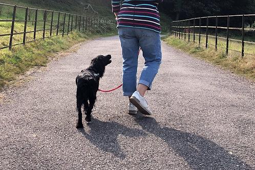 Loose Lead Walking Programme